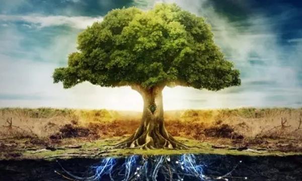 """学会讲""""大树理论"""",让你的直销不再困难!-直销家园网"""
